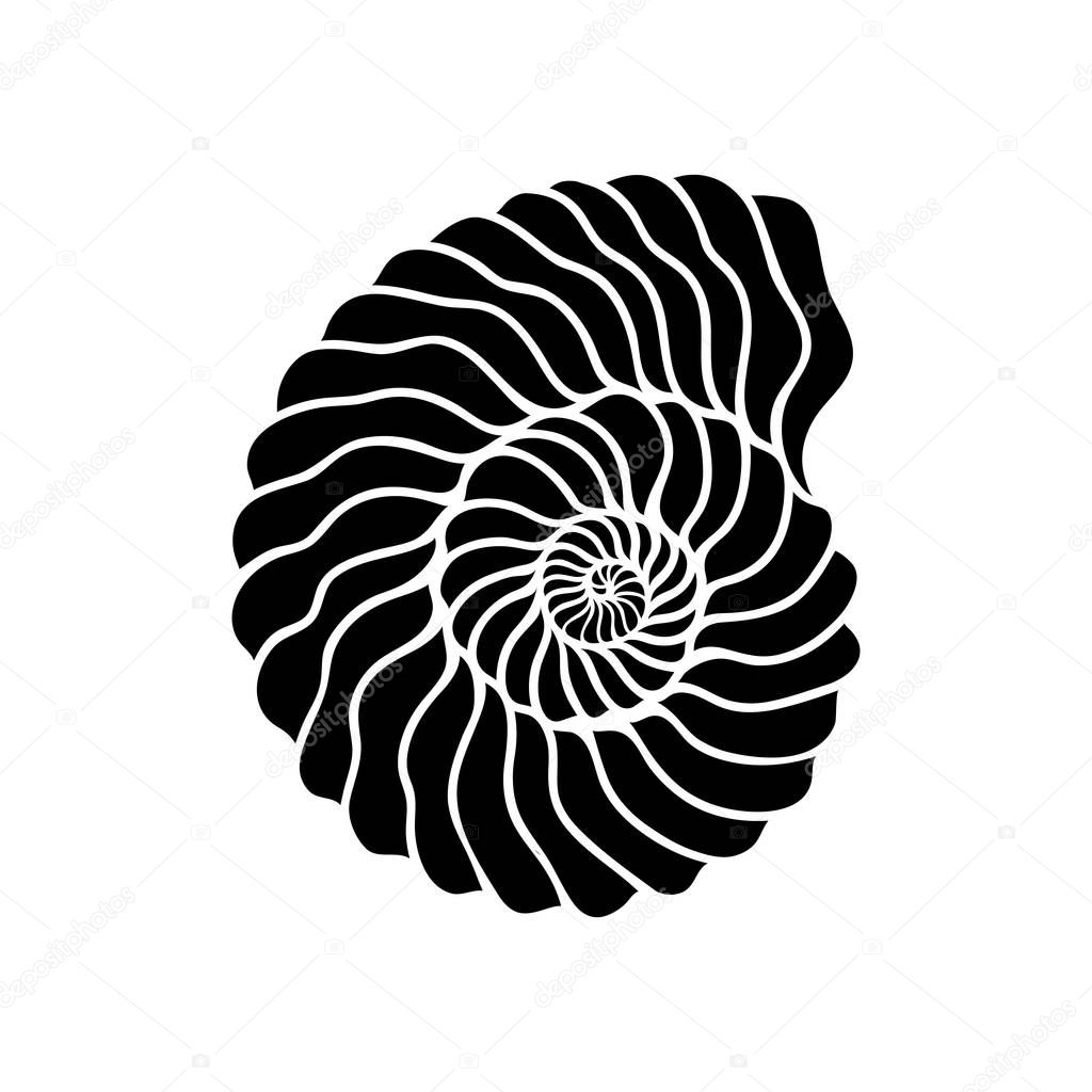 Graphic circle seashell