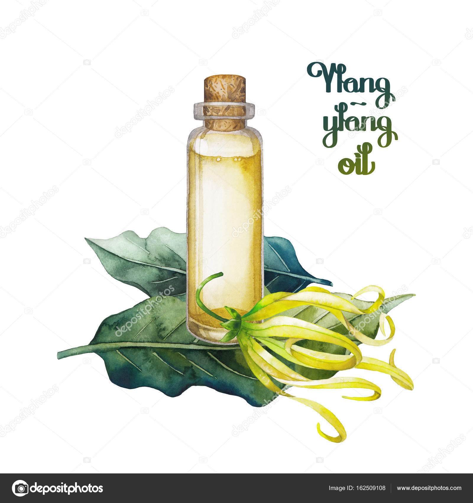 Watercolor ylang ylang oil stock photo homunkulus28 162509108 watercolor ylang ylang oil hand painted bottle leaves and flowers isolated on white background herbal medicine and aroma therapy photo by homunkulus28 mightylinksfo