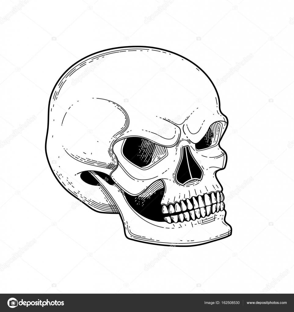 Gráfico cráneo con sonrisa temerosa — Vector de stock © homunkulus28 ...