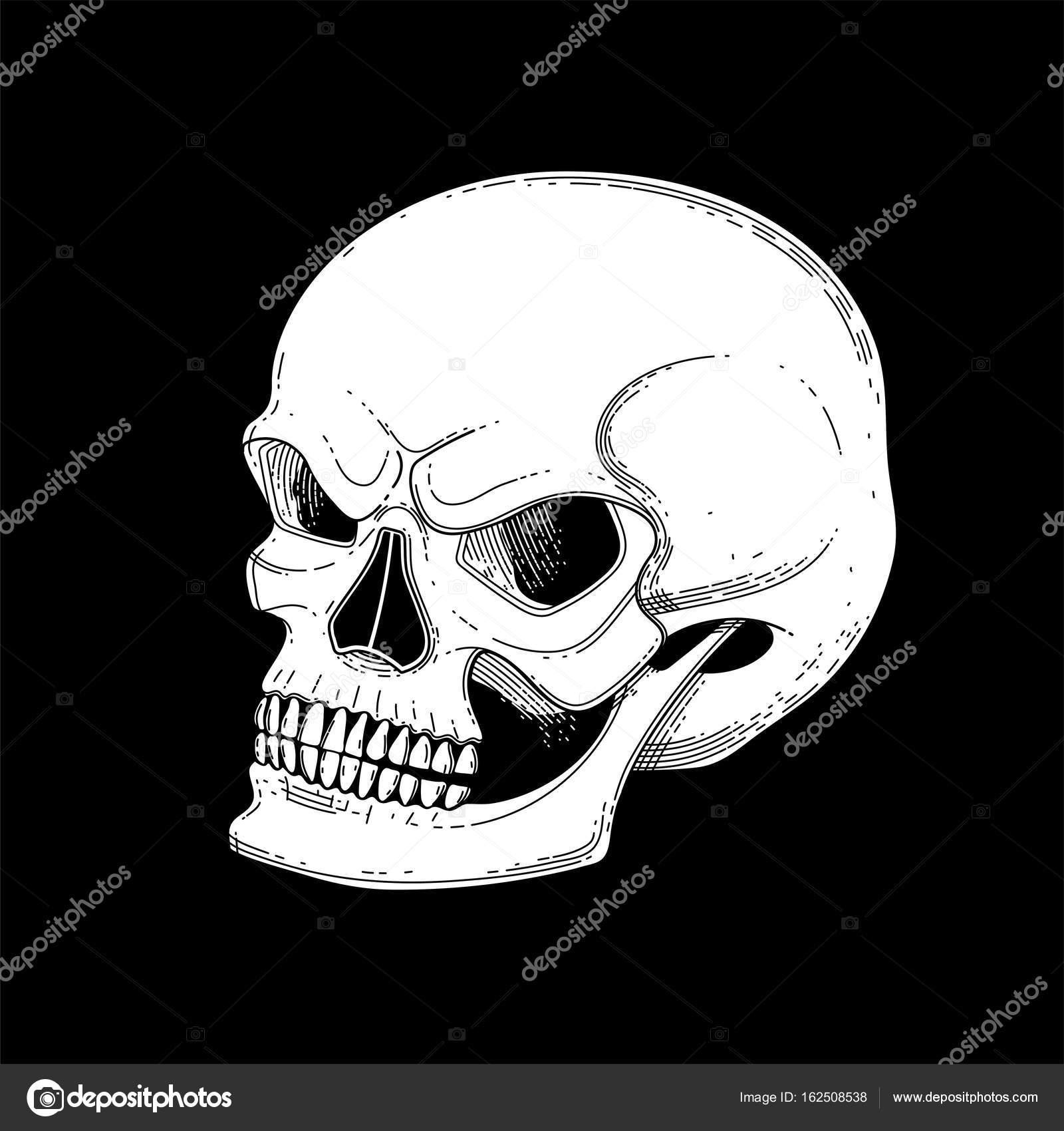 Gráfico cráneo con sonrisa temerosa — Archivo Imágenes Vectoriales ...