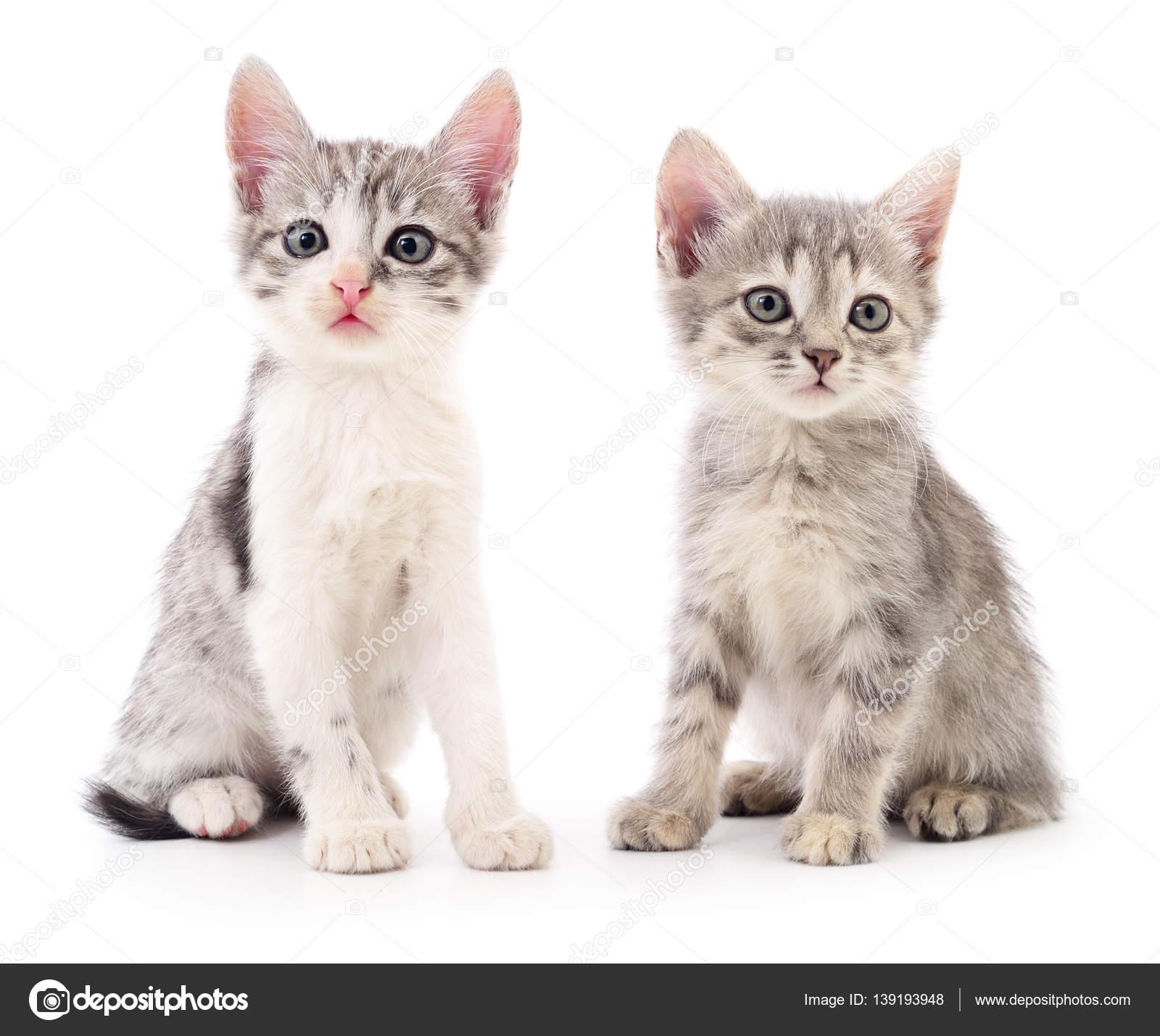Due gattini piccoli foto stock olhastock 139193948 for I gattini piccoli