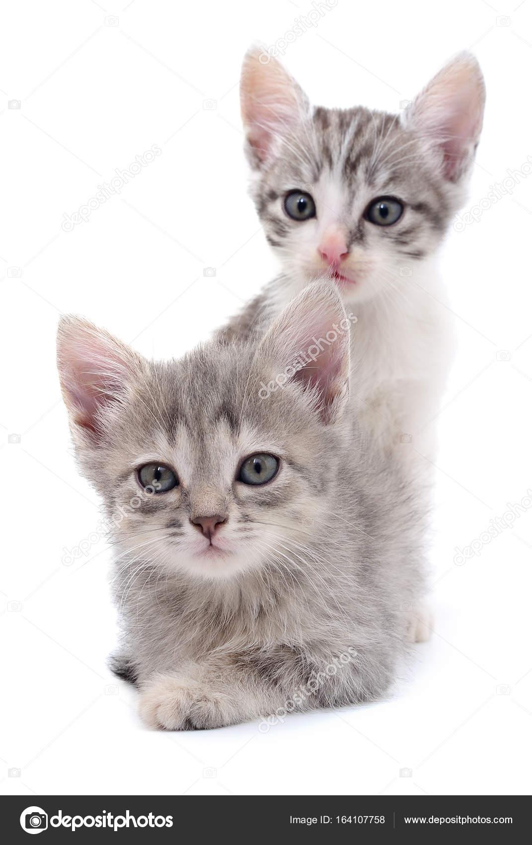 Due gattini piccoli foto stock olhastock 164107758 for I gattini piccoli