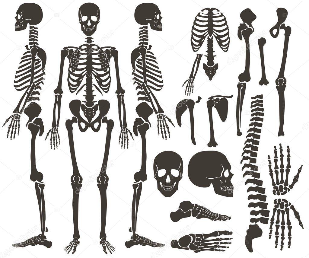 Colección de silueta de negro oscuro esqueleto de huesos humanos ...