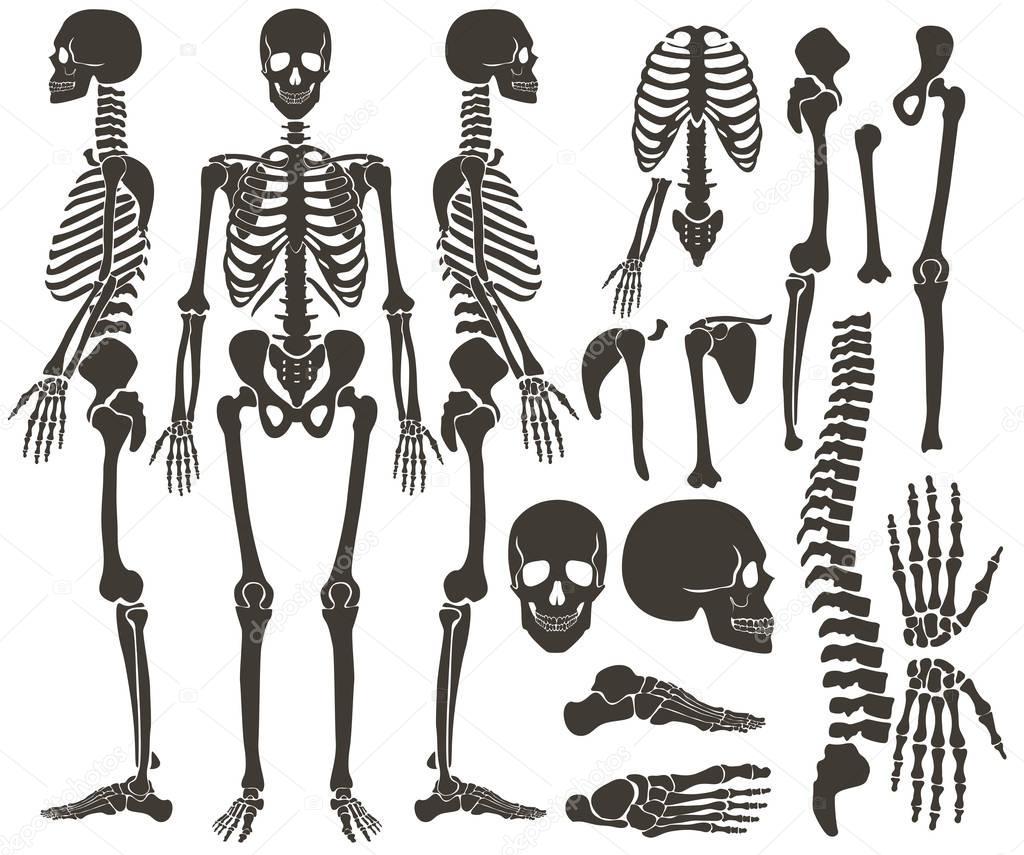 Menschliche Knochen Skelett dunkle schwarze Silhouette Kollektion ...