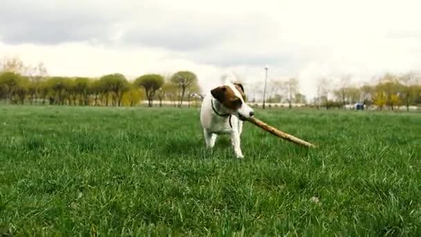 Hra pes s holí