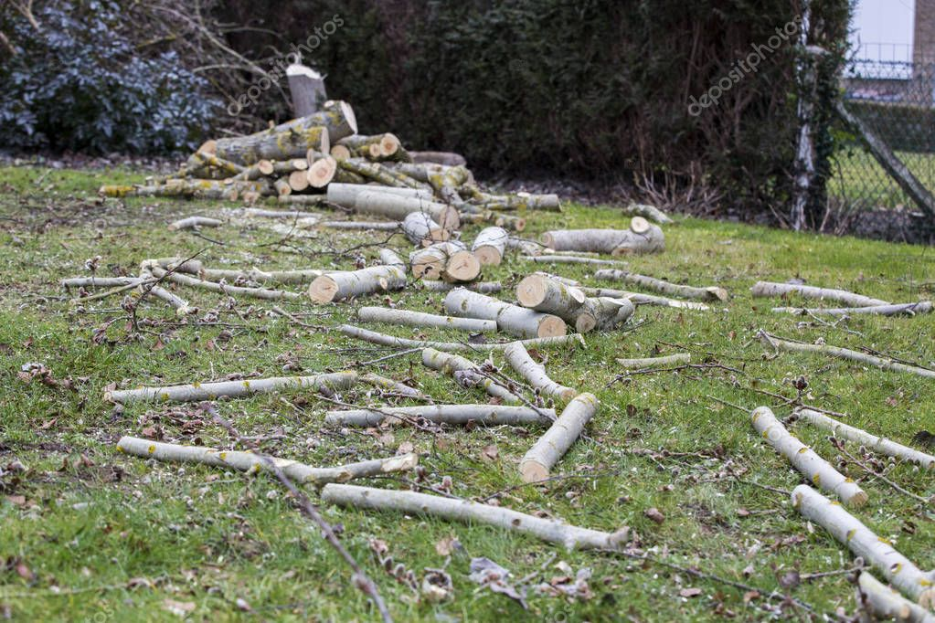 A tree falling in the garden while being cut
