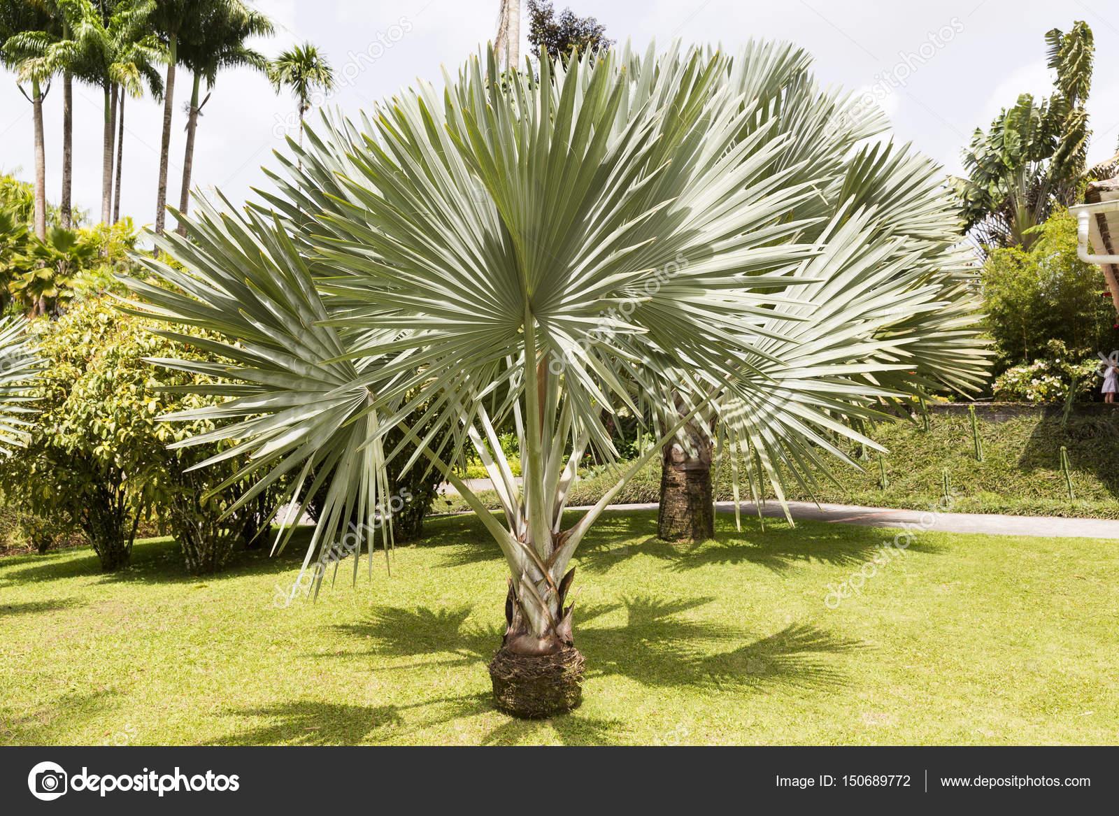 Tropischer Garten Mit Bäumen Pläne Palm Farn Blumen U2014 Foto Von  CatherineL Prod