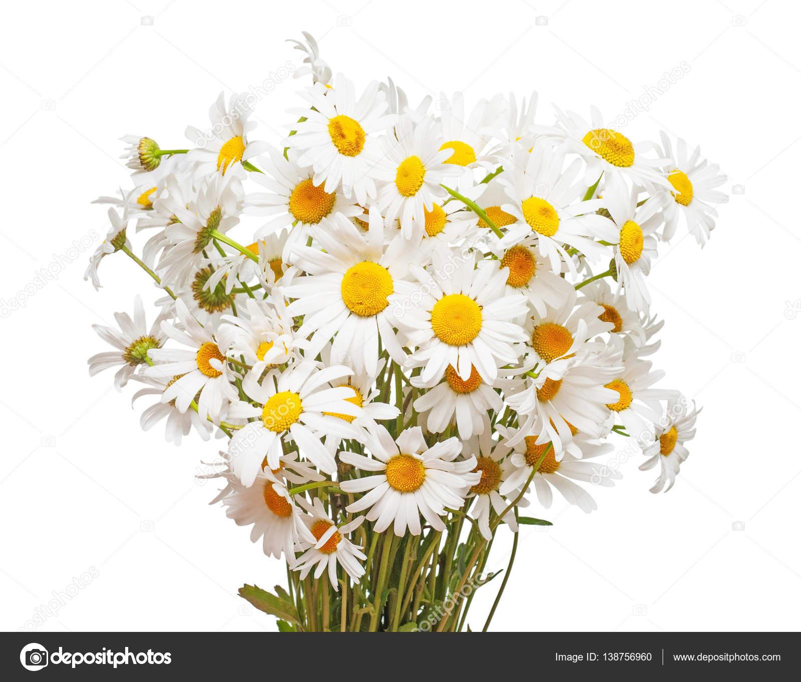 https://st3.depositphotos.com/6084264/13875/i/1600/depositphotos_138756960-stock-photo-bouquet-of-large-white-daisies.jpg