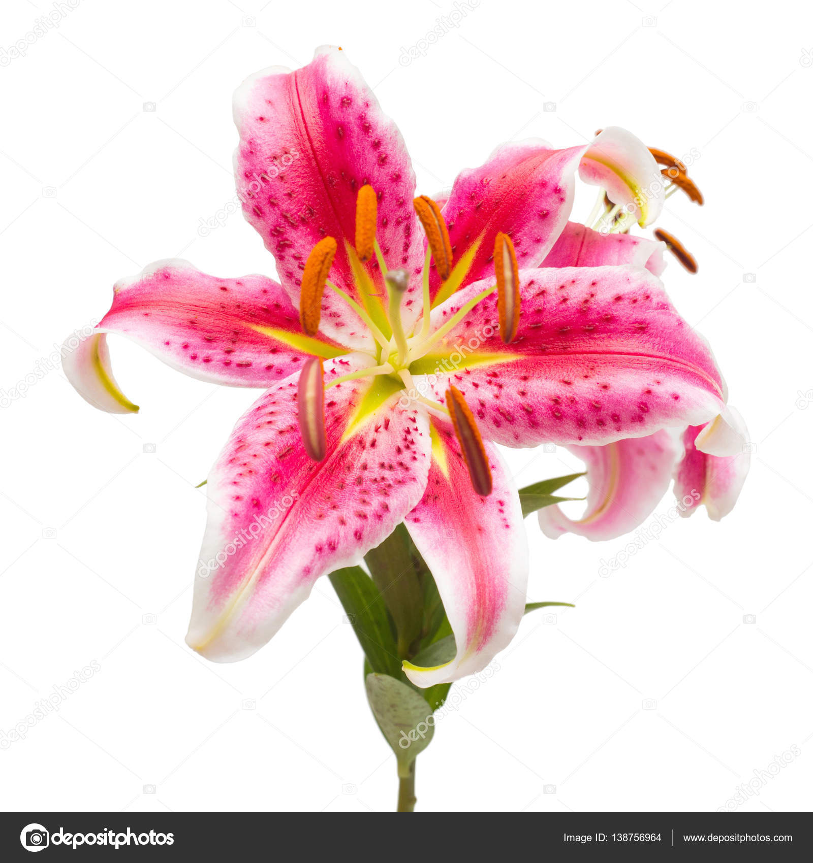 Beautiful Bouquet Of Pink Lily Flowers Stock Photo Flowerstudio