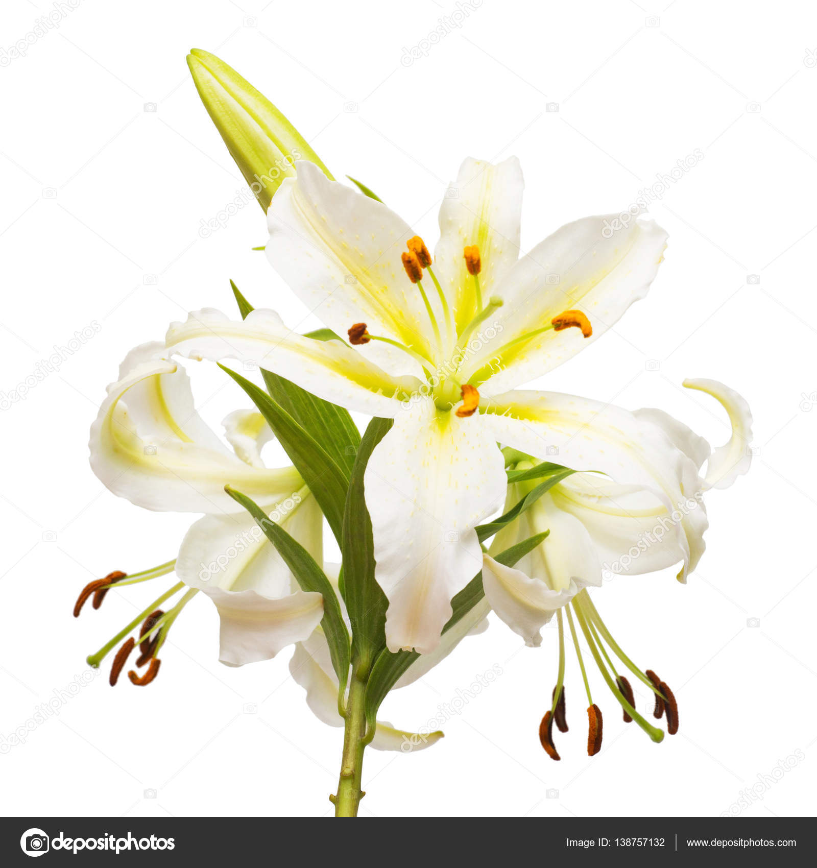 Bouquet of beautiful white lily flowers stock photo flowerstudio bouquet of beautiful white lily flowers isolated on white background flat lay top view photo by flowerstudio izmirmasajfo
