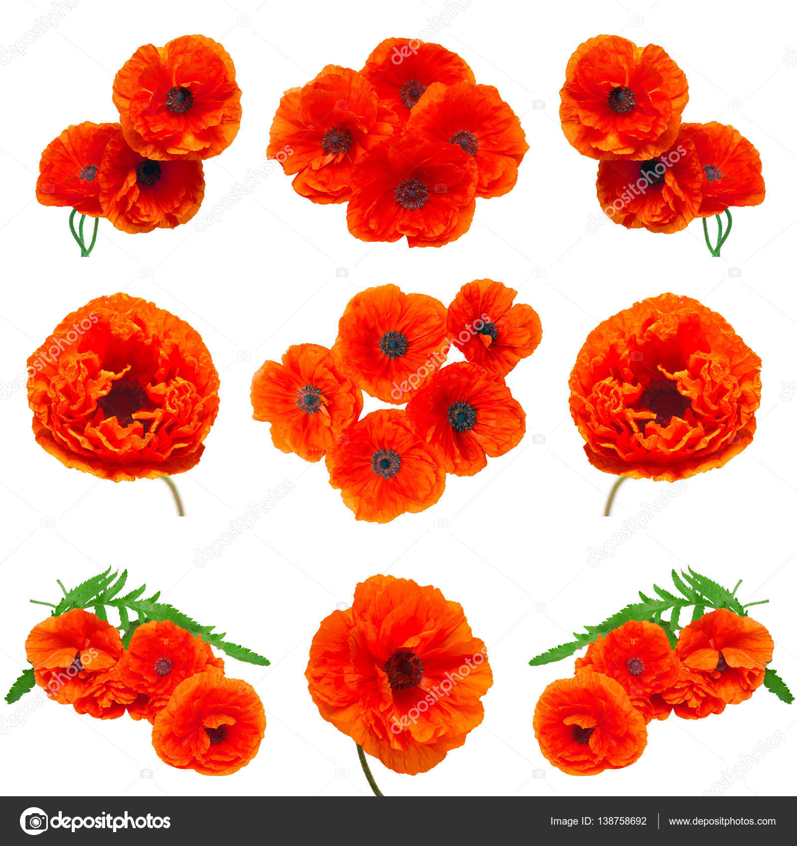 Collection Poppy Red Flowers Stock Photo Flowerstudio 138758692