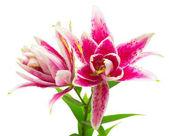 Fotografie Schöner Blumenstrauß rosa Lilie