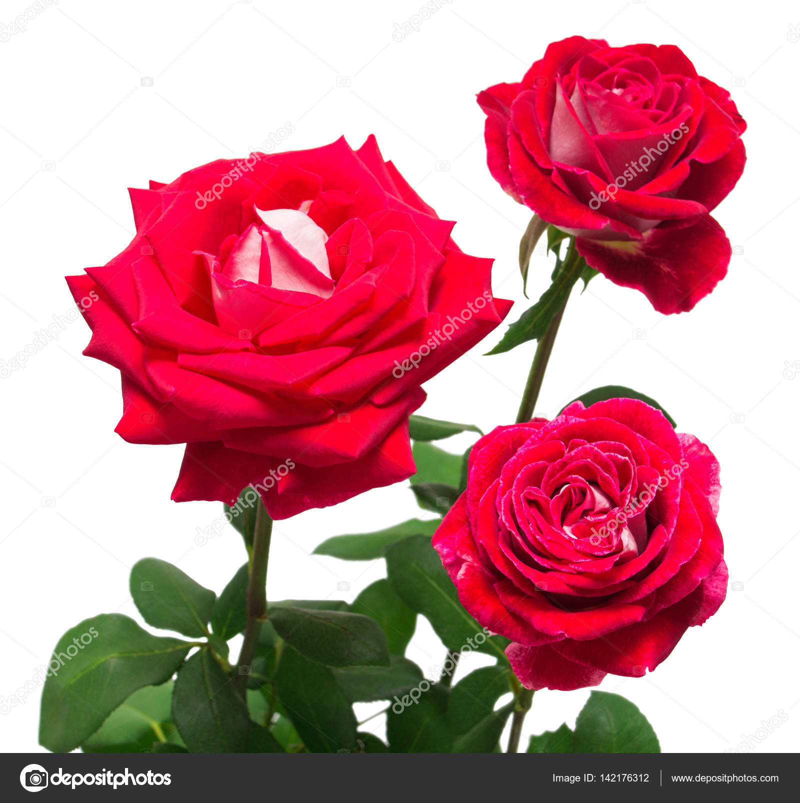 A beautiful bouquet of red flowers roses isolated on white backg a beautiful bouquet of red flowers roses isolated on white backg stock photo izmirmasajfo