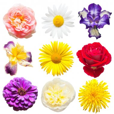 Beautiful collection of flowers