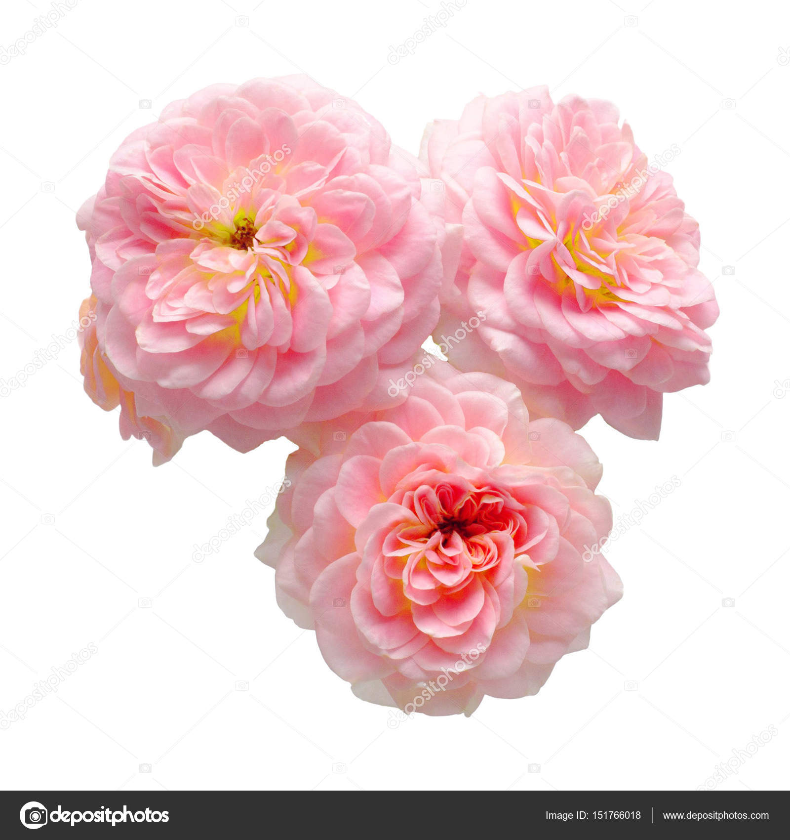 Bouquet of beautiful flowers of roses stock photo flowerstudio bouquet of beautiful flowers of roses isolated on white background wedding card greeting summer spring flat lay top view red pink love izmirmasajfo