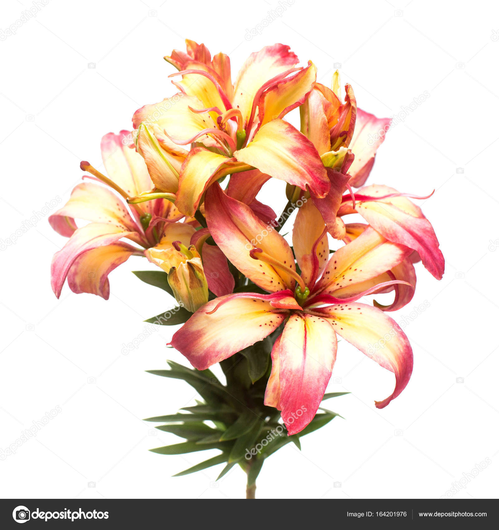 Beautiful Bouquet Lily Flower Isolated On White Background Form