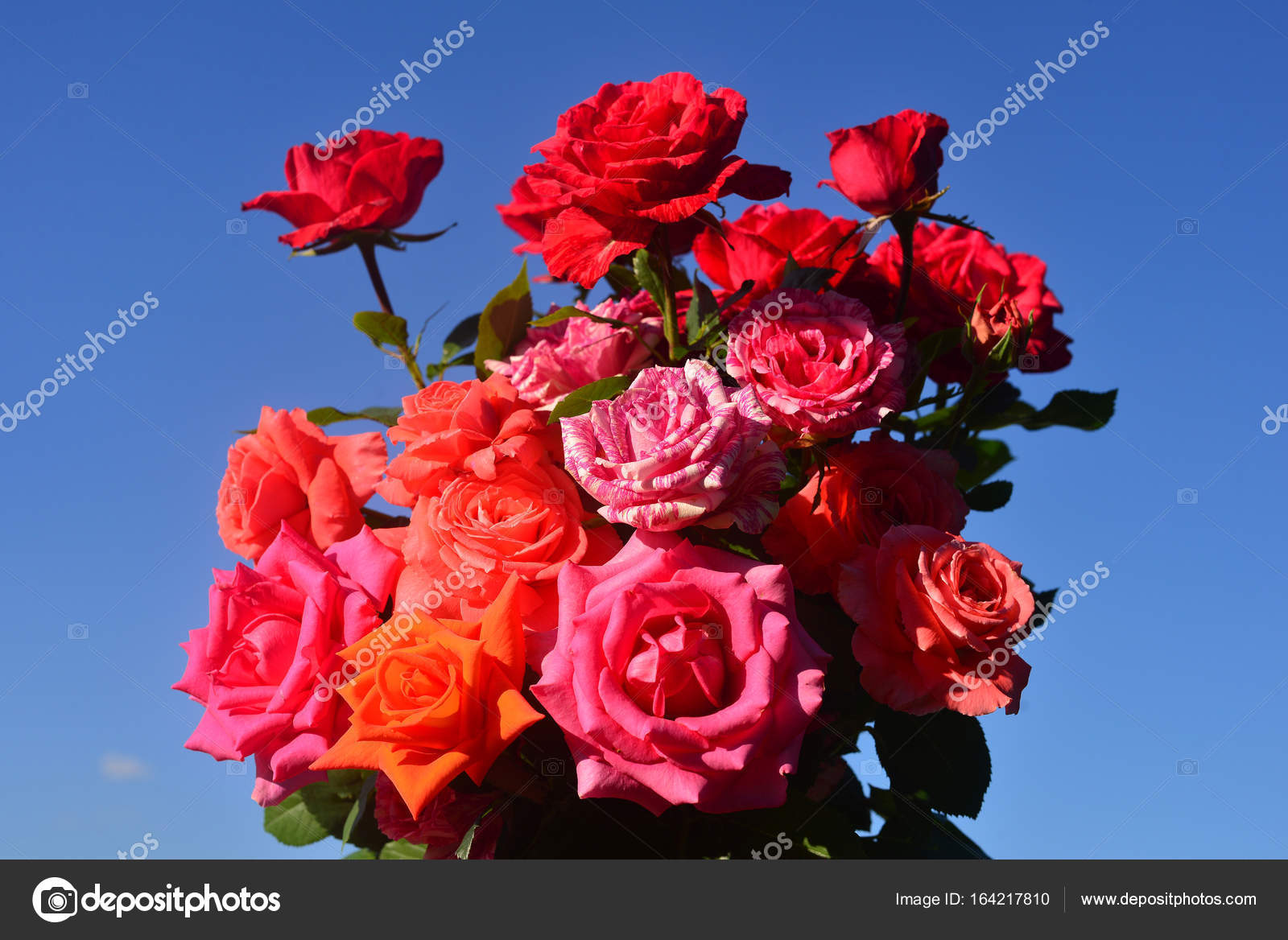 Beautiful bouquet of flowers roses in the garden on a blue sky b beautiful bouquet of flowers roses in the garden on a blue sky b stock photo izmirmasajfo
