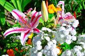 Krásný květinový s lily žlutými a oranžovými květy před