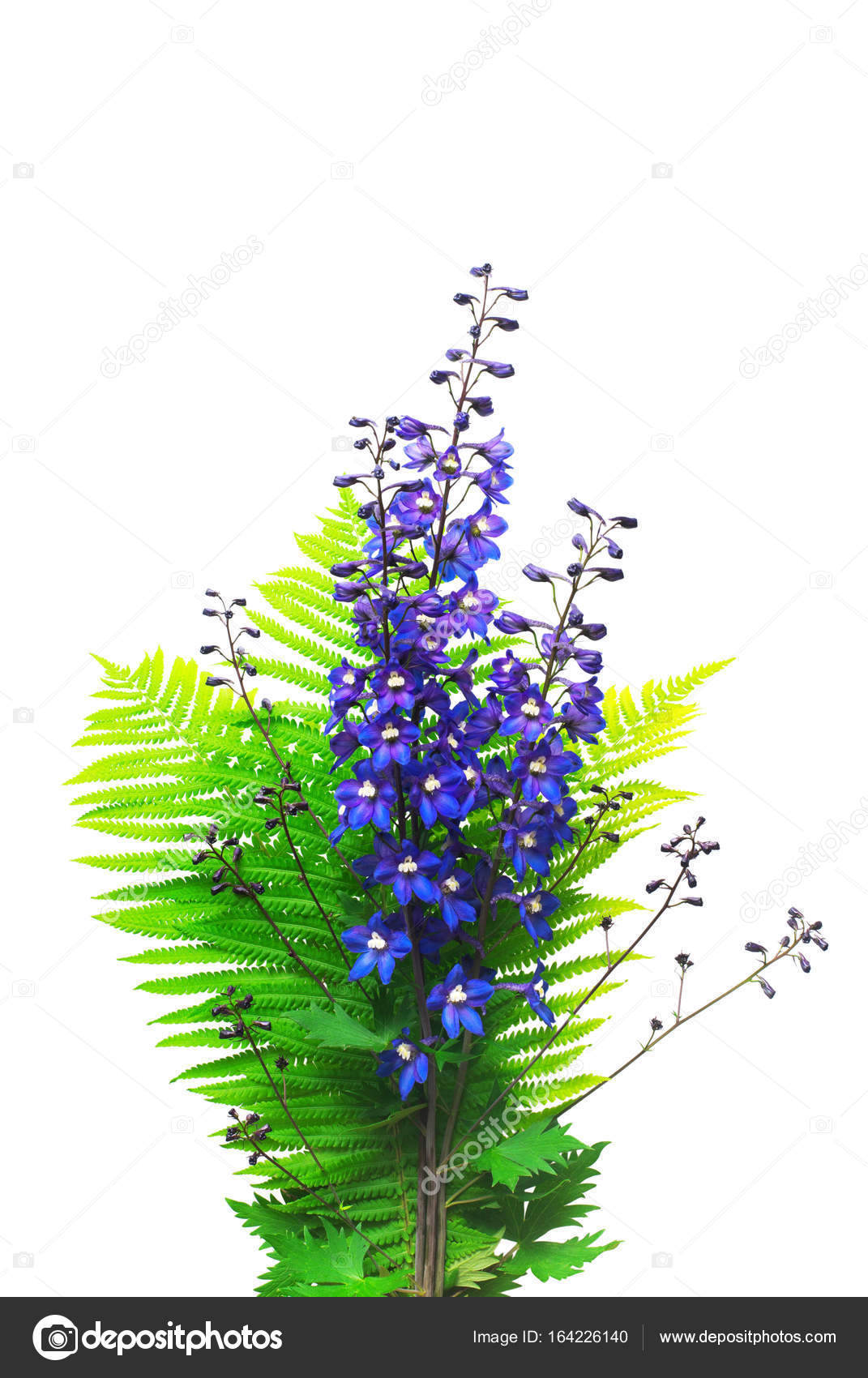 Delphinium Flowers And Fern Branch In Bouquet Isolated On White