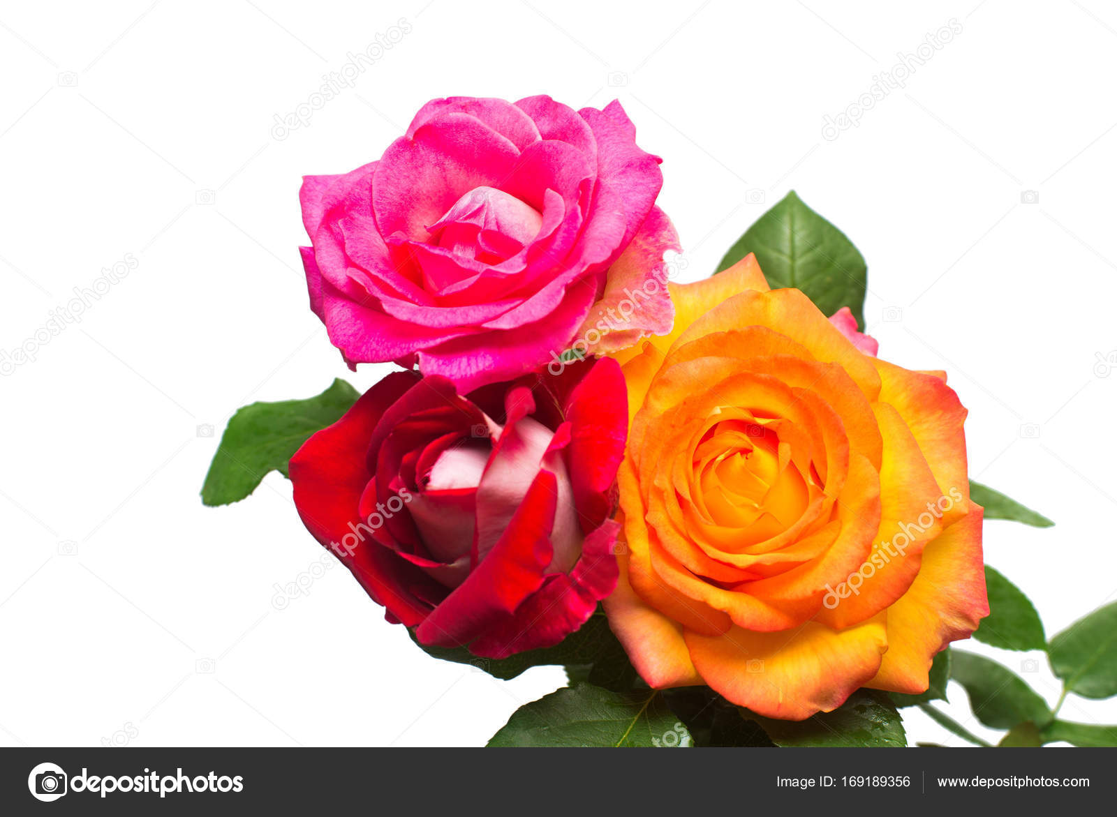 Bouquet of beautiful flowers of red, orange and pink color. Wedd ...