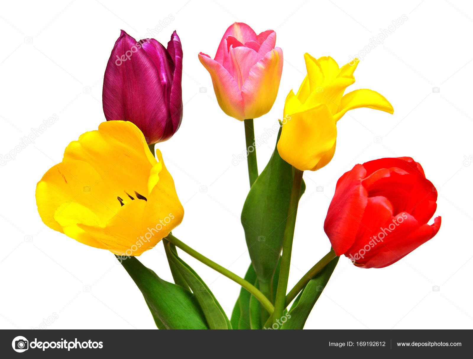 Bouquet of colorful and beautiful tulips flowers isolated on whi bouquet of colorful and beautiful tulips flowers isolated on whi stock photo izmirmasajfo