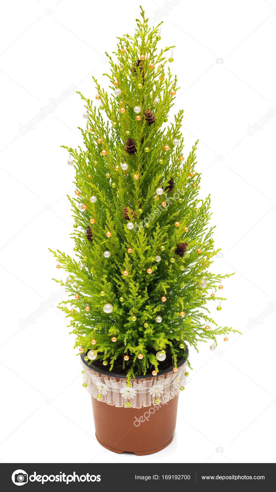 christmas tree cypress in a pot decoration with balls pine cone stock photo - Cypress Christmas Tree