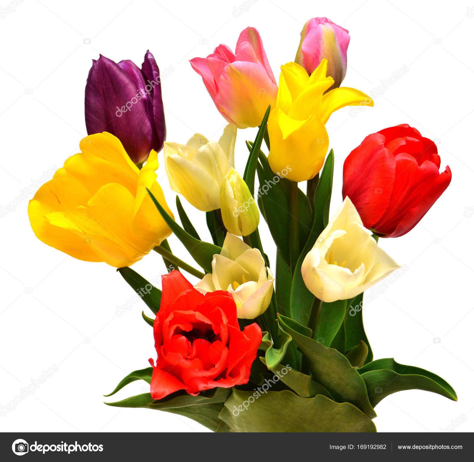 Bouquet Of Colorful And Beautiful Tulips Flowers Isolated On Whi
