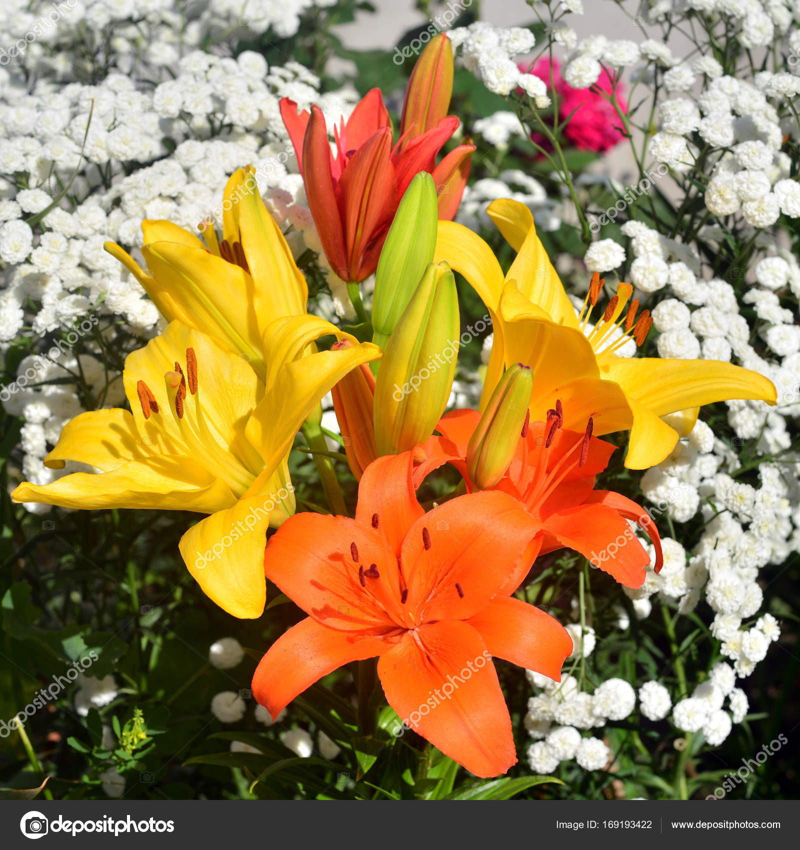 A Beautiful Flowerbed With Yellow And Orange Lily Flowers Agains