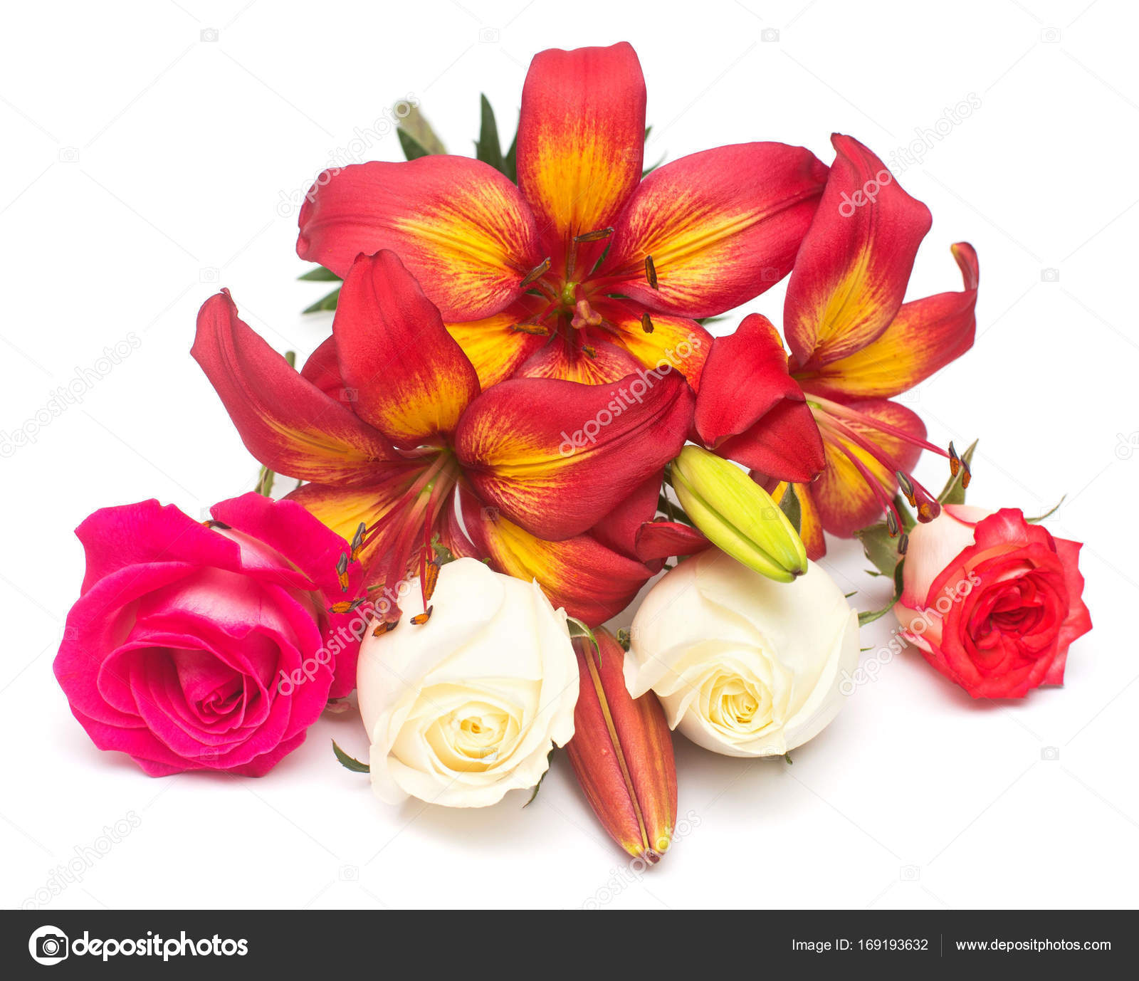Flowers red lily in the form of a star and white rose with buds flowers red lily in the form of a star and white rose with buds stock izmirmasajfo
