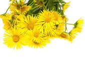 A bouquet of yellow flowers curative daisies isolated on white b