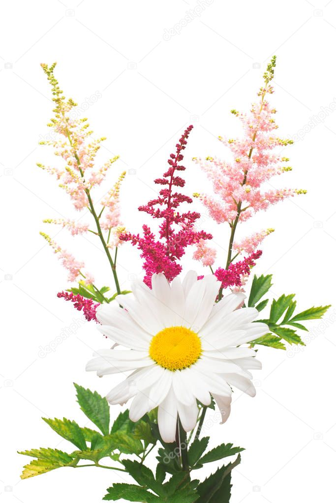 Flowers of chamomile and astilbe in a bouquet isolated on white