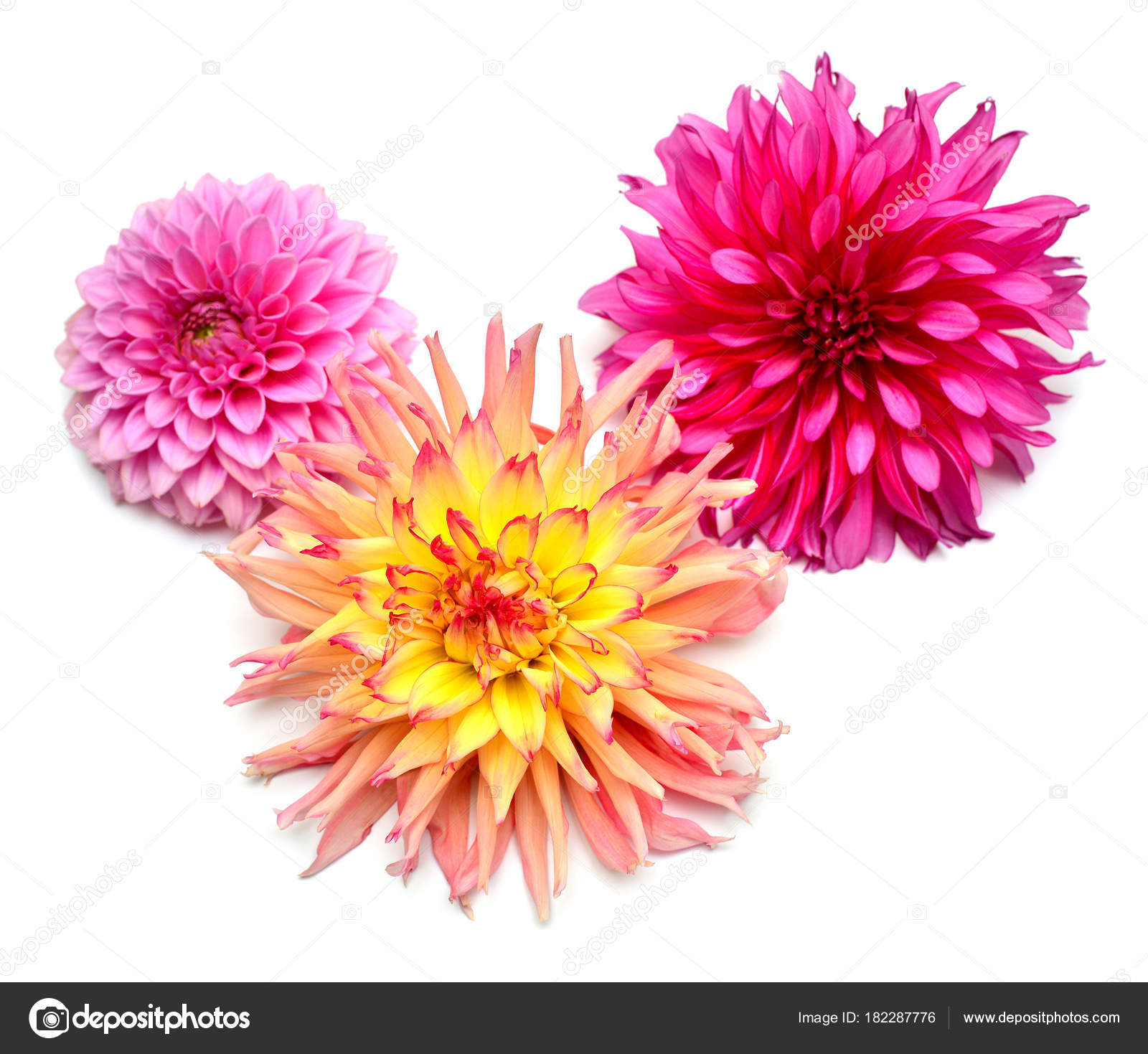 Bouquet Creative Multi Colored Flowers Dahlia Isolated White