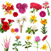 Photo Collection of beautiful colorful flowers dahlias, gladiolus, dandelions, daisies, roses, lilies and other isolated on white background. Flat lay, top view