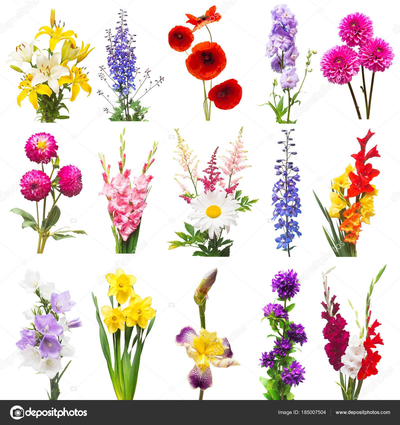 Colecci n de hermosa flores una variedad de delphinium - Clase de flores y sus nombres ...