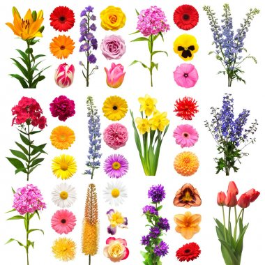 Collection beautiful flowers tulip, delphinium, lily, gerbera, eremurus, carnation, rose, daisy, dahlia, phlox, daffodil, bell, peony, chrysanthemum isolated on white background. Flat lay, top view stock vector