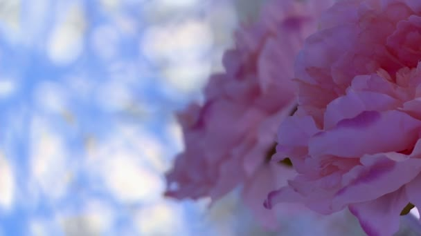 Detail růžové květy a dekorativní tkáně