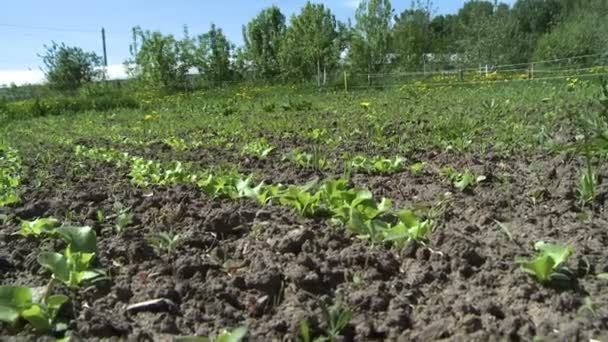 Lůžka na hřišti s výhledem na zeleninu