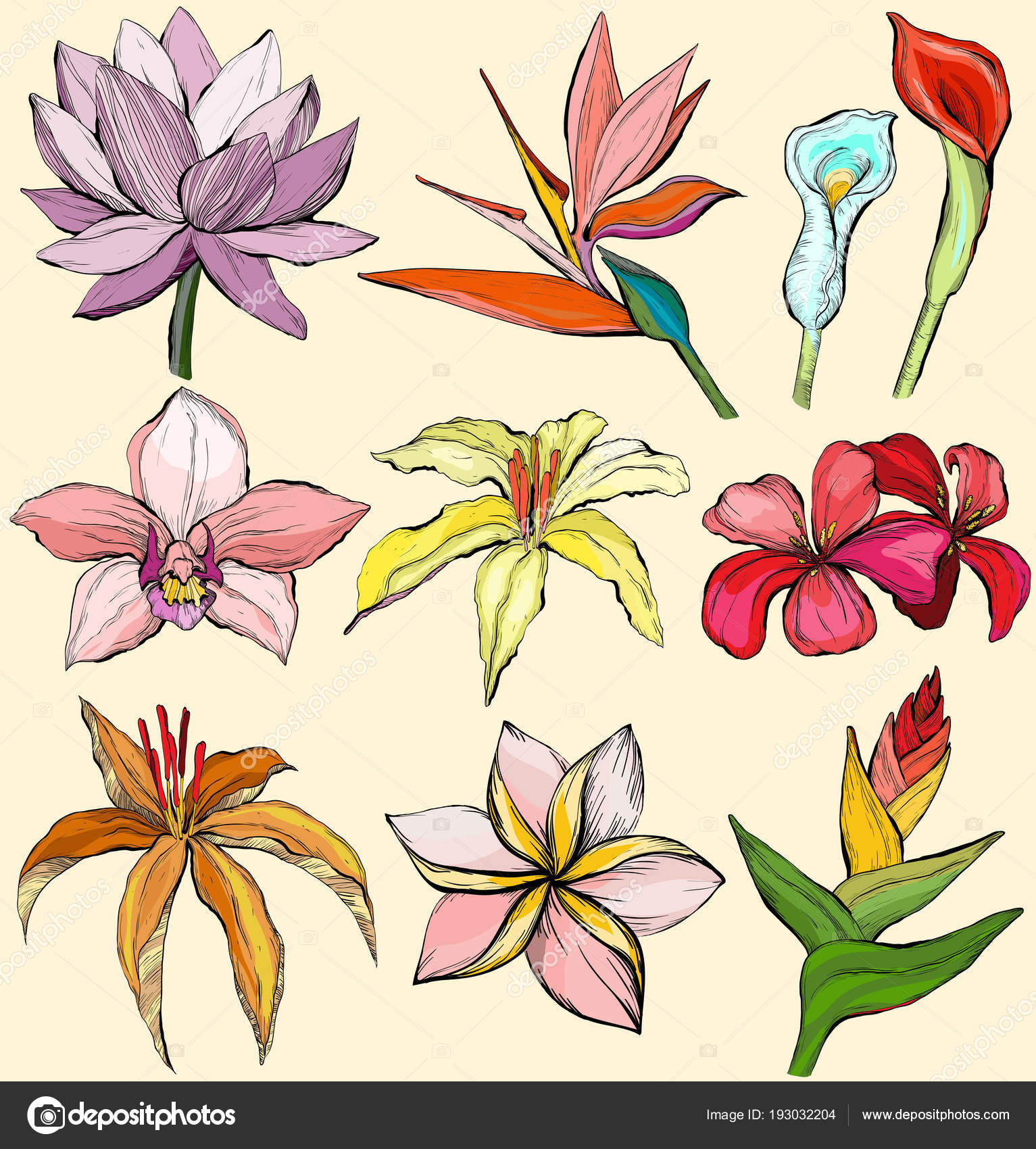 Tropical flowers water lily orchid clematis plumeria tropical flowers water lily orchid clematis plumeria frangipani bird of paradise and hibiscus vector illustration vector by mirifada izmirmasajfo