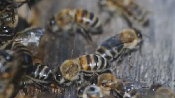 Méhek repülnek a méhkas. Megy ki és méheket hive. Makro lövés.