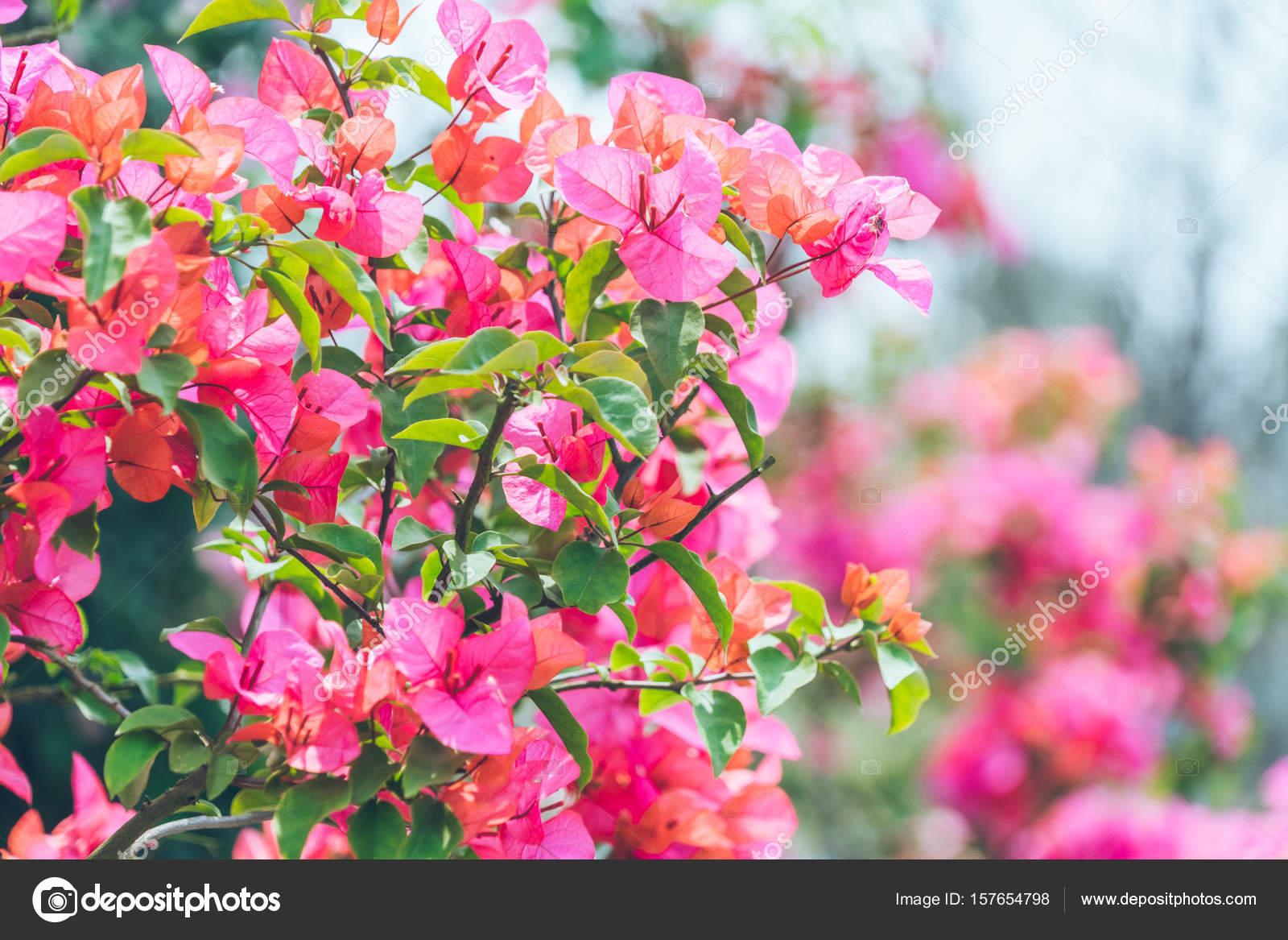 Fleur Exterieur Rose