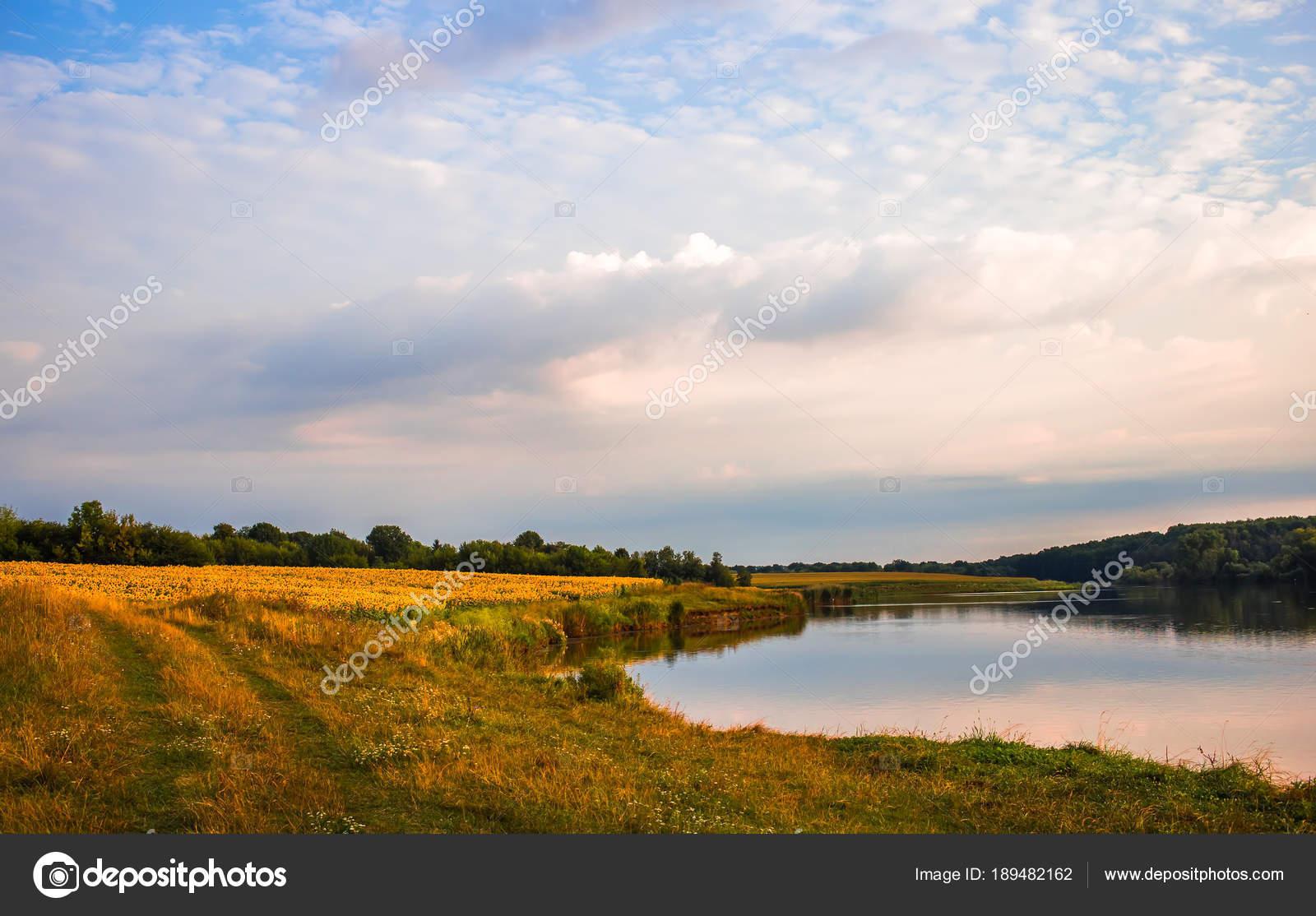 Vista desde la orilla del río en el marco de pino — Fotos de Stock ...