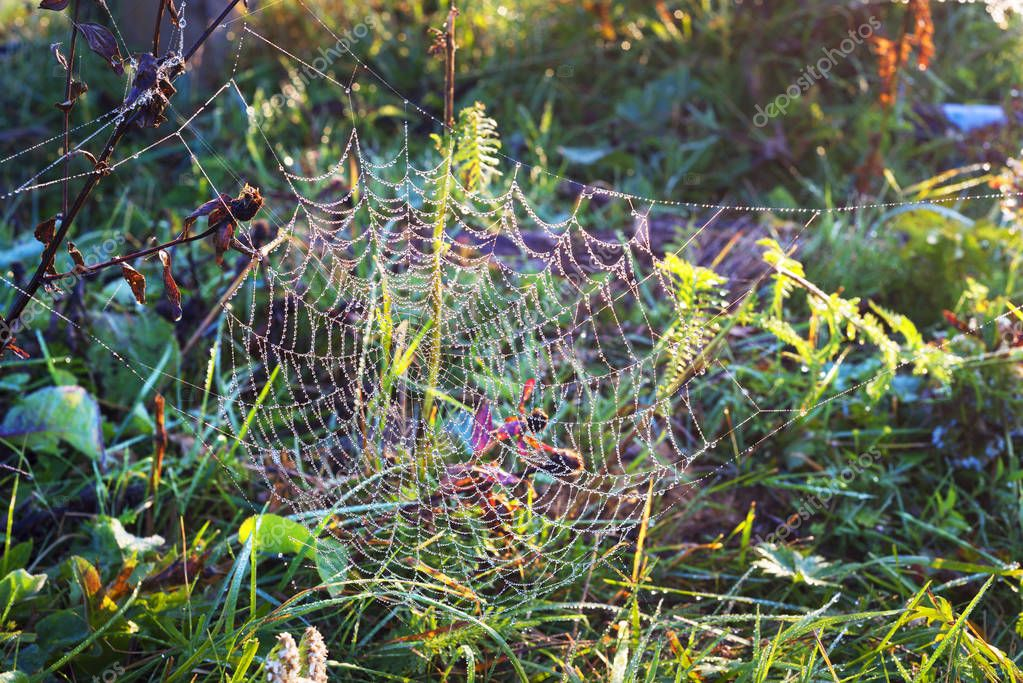 Dewdrops on a spider web in the forest