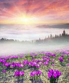 Mlhavé svítání v Karpatských horách