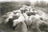 Duch antiky s ovcí v horách