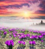 Photo Foggy sunrise in the Carpathian mountains