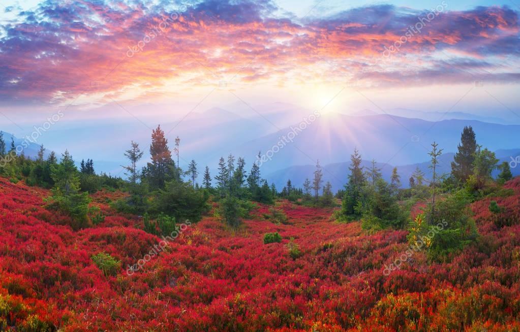 Autumn colors in the Carpathians