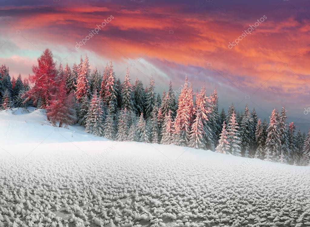 Forest after a storm in the Carpathians