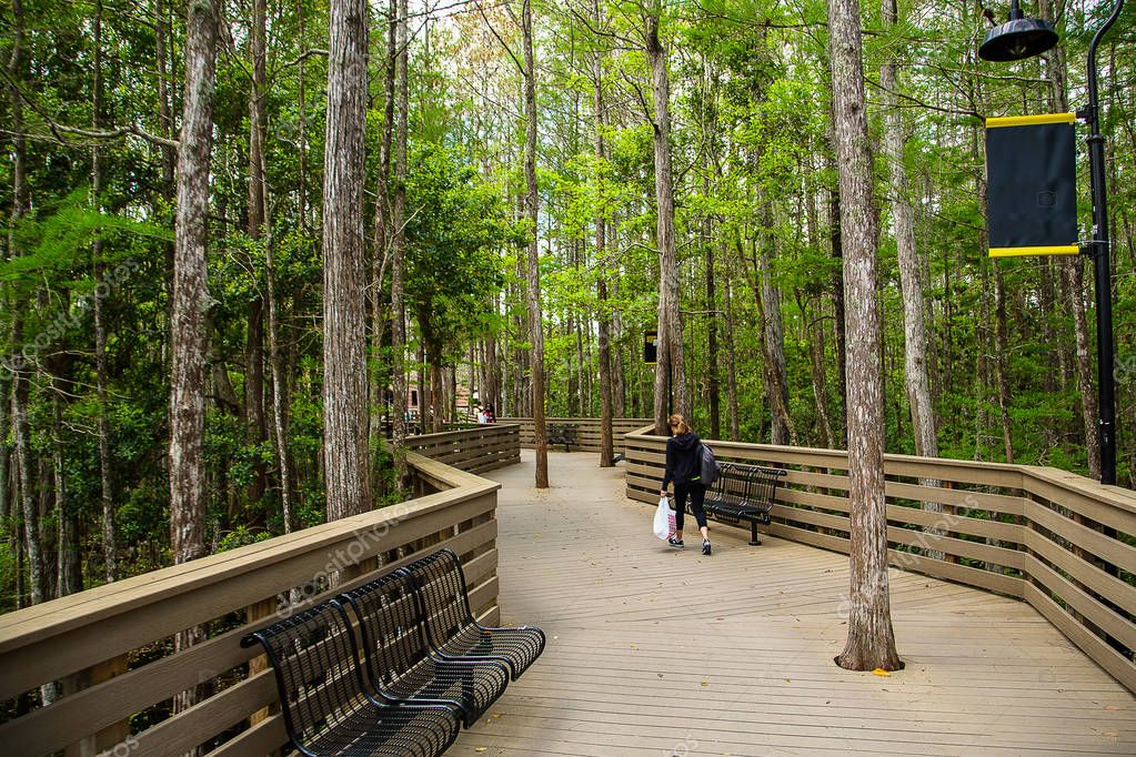 Wooden path in Florida university forest. Best place for studying.