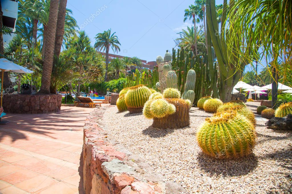 Beautiful green nature plants with palms and cactuses on Gran Canaria island