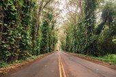 Silniční lane, chodník cestu s tunelem zelené stromy v lese. Krásná alej, cesta v parku. cesta lesem v létě. Ostrov Kauai